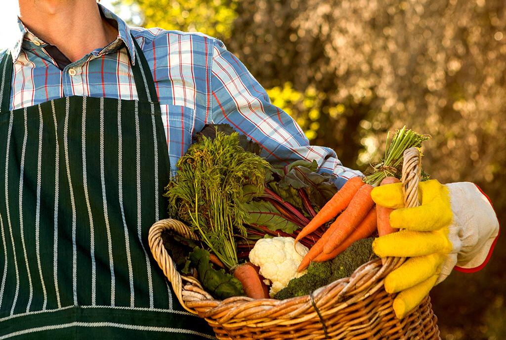 """<span style=""""color: #ff6600;""""><em>Obst, Gemüse und Salat und aus dem ungeschützten Garten sollten gründlich gewaschen und idealerweise gekocht verzehrt werden. Die Eier sterben beim Kochen ab – aber vermutlich nicht durch gefrieren. © wavebreakmedia / shutterstock.com</em></span>"""