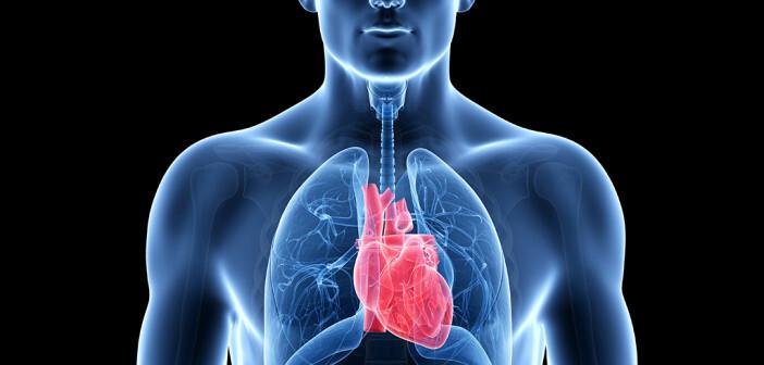 Bereits geringfügige Beeinträchtigungen der Lungenfunktion können mit gestörten Pumpfunktion des Herzen einhergehen. © Sebastian Kaulitzki / shutterstock.com