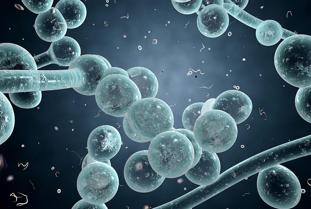 Durch Schwächung des Immunsystems wird den Erregern von Pilzerkrankungen im menschlichen Körper keine Gegenwehr geboten. © Kateryna Kon / shutterstock.com