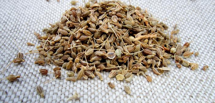 In Studien wurden verschiedene Eigenschaftenvon Pimpinella anisum – Anis – beschrieben. ©Northy Sona Sladeckova / shutterstock.com