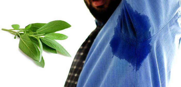 Salbei soll bei Hyperhidrose helfen, übermäßiges Schwitzen in den Griff zu bekommen. © Zurijeta / Scisetti Alfio / shutterstock.com