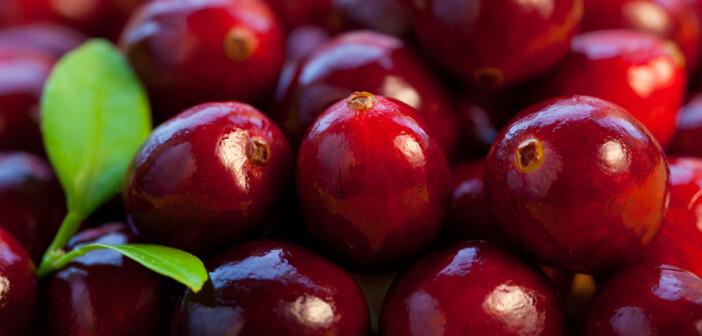 Cranberry und Preiselbeere haben sich bei Frauenleiden bewährt. © sarsmis / shutterstock.com