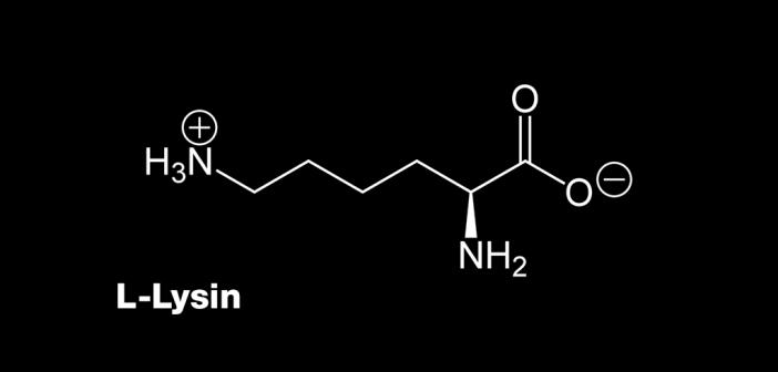 Die Aminosäure L-Lysin kann vor allem auch sehr gut vorbeugend gegen Fieberblasen eingenommen werden.