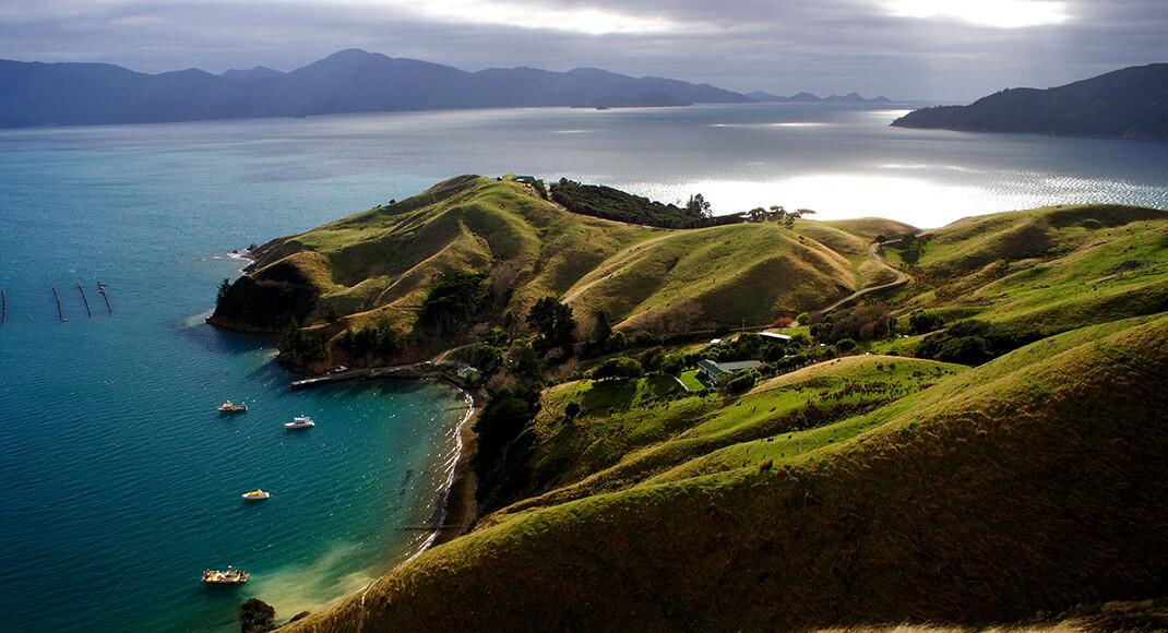 Die Heimat der Grünlippmuschel ist die Südinsel Neuseelands – Marlborough Sounds. © Sasapee / shutterstock.com