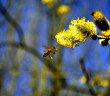 Einige einfache Tipps sind bei Pollenallergie hilfreich. © ezp / shutterstock.com