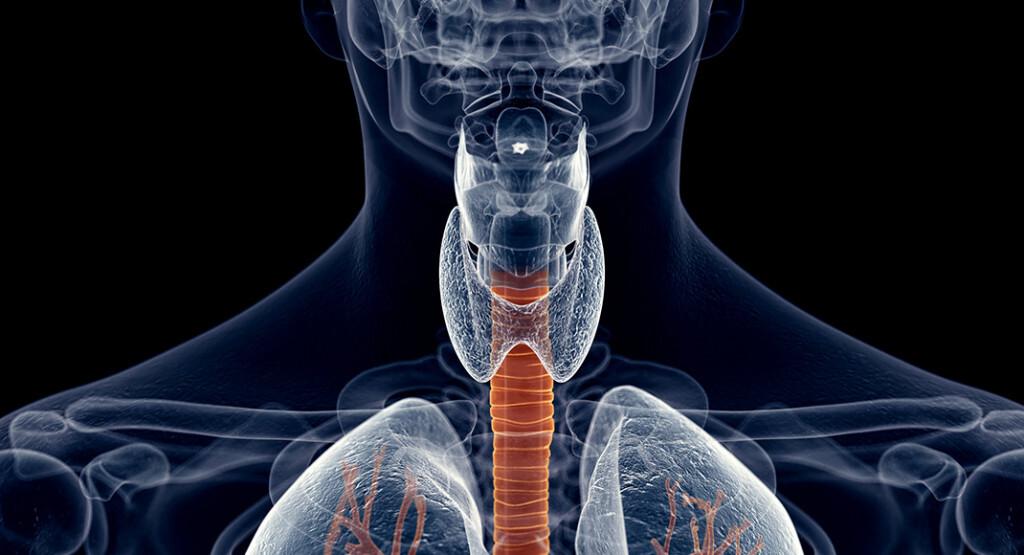Gefährlich ist jene Form der Dysphagie, bei der Speisebrei beim versehentlichen Verschlucken in die Luftröhre gelangt und zu Schluckstörungen führt. © Sebastian Kaulitzki / shutterstock.com