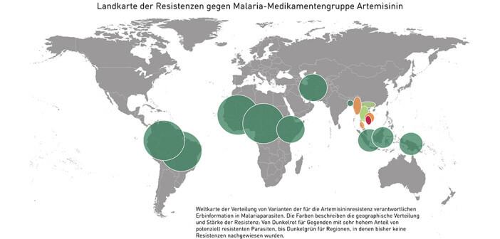 """Weltweite Landkarte der Resistenzen gegen Malaria-Medikamentengruppe Artemisinin erstellt. Die Grafik zeigt die Verteilung der Resistenzen gegen Artemisinin auf der Welt. """"Dunkelgrün"""" bedeutet, dass faktisch alle Parasiten """"normal"""" (und somit nicht resistent gegenüber Artemisininen) sind, rot (primär in SO-Asien), dass ein sehr hoher Prozentsatz eine Mutation (so genannte K13-Polymorphismen) trägt, die mit Artemisininresistenz verbunden ist. © MedUni Wien"""
