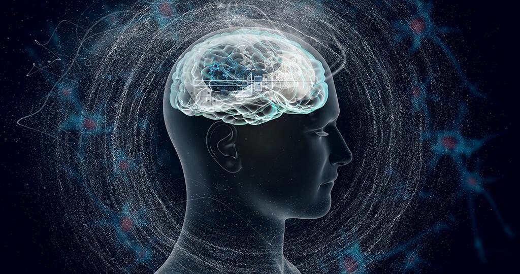 Gehirn © vitstudio / shutterstock.com