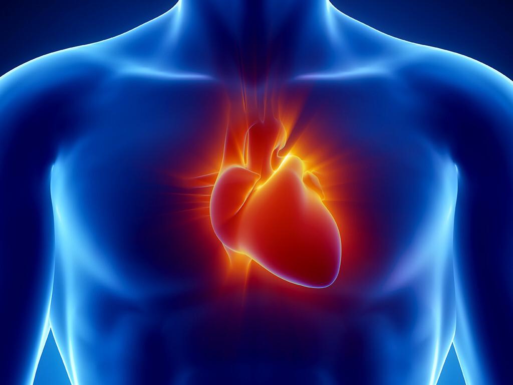 Es zeigt sich, dass Stress Herzinfarkt, Herzschwäche und andere Gefäßerkrankungen verursachen kann. © CLIPAREA l Custom media / shutterstock.com