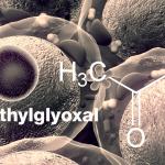 In Organismen entsteht das Methylglyoxal häufig als Nebenprodukt von Stoffwechselvorgängen,–insbesondere im Zusammenhang mit der Glykolyse. © UGREEN 3S / shutterstock.com