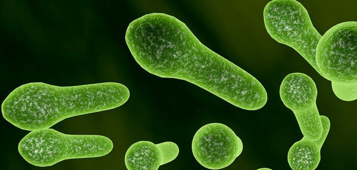Clostridium difficile Infektion: verdreifacht. © Kateryna Kon / shutterstock.com