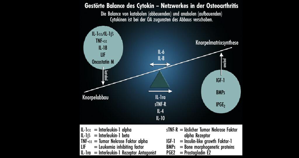 Gestörte Balance des Cytokin bei Arthrosen.