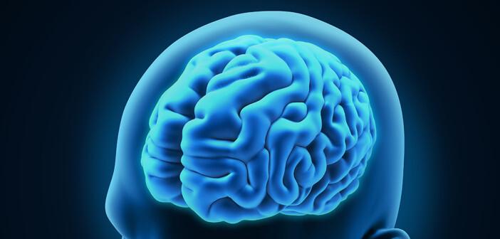 Gehirn © Nerthuz / shutterstock.com