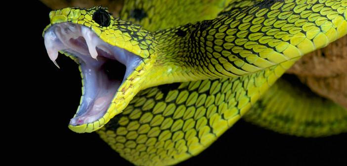 Die Angst vor Spinnen und Schlangen ist im Menschen tief verwurzelt. © reptiles4all / shutterstock.com