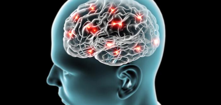 Gehirn © naeblys / shutterstock
