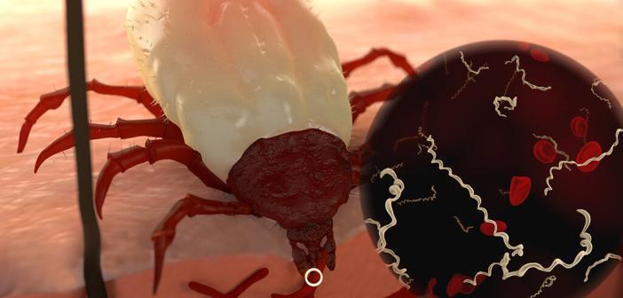Ein Zeckenbiss kann zur Infektion mit Borrelien Bakterien führen. © Juan Gaertner / shutterstock.com