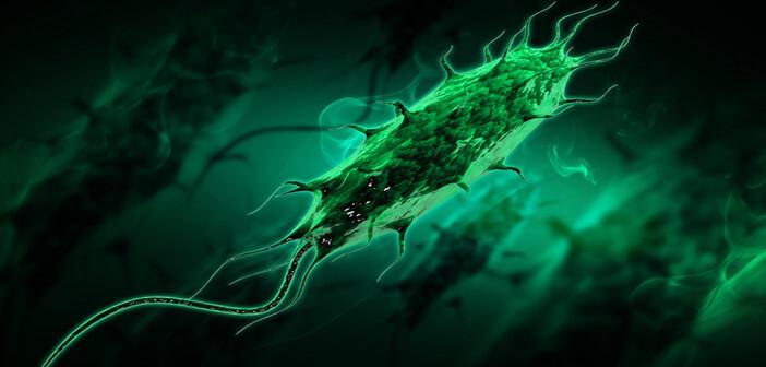 Multiresistente gram-negative Bakterien – wie ESBL-produzierende E. coli – bedrohen zunehmend den medizinischen Fortschritt in der Human- und Veterinärmedizin. © sarans / shutterstock.com