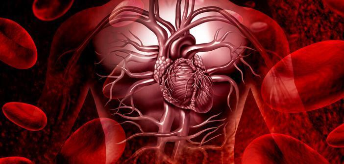 Das Herz-Kreislauf-Risiko steigt mit Höhe der Blutzuckerwerte. © lightspring / shutterstock.com