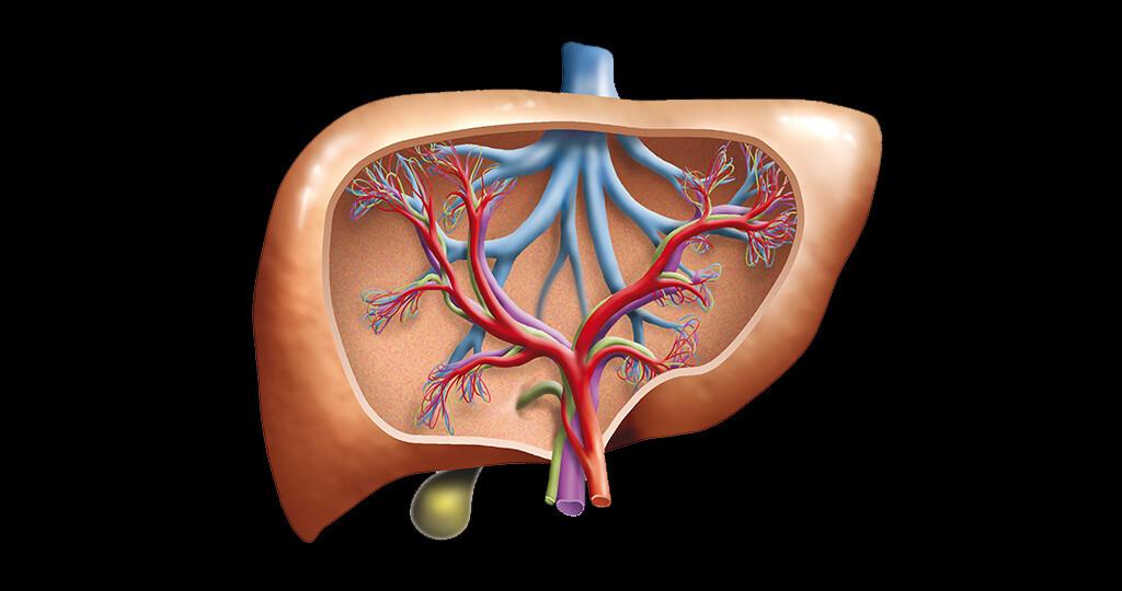 Die indirekte Pfortaderdruckmessung hat sich in den letzten Jahren bei Patienten mit portaler Hypertension zu einer sehr nützlichen Untersuchung entwickelt. © peter hermes furian / shutterstock.com
