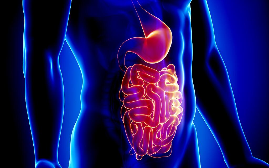 Magen-Darm-Trakt © cliparea-l-custom-media / shutterstock.com
