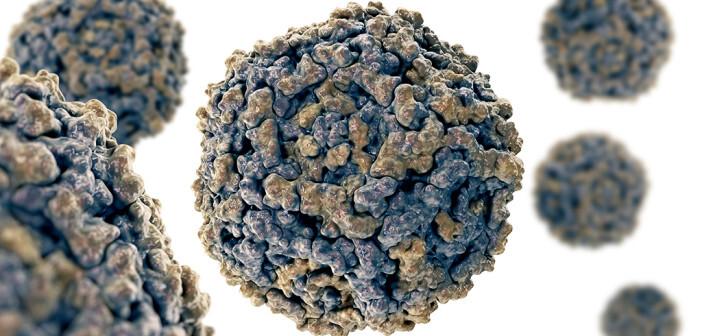 Besondere Bedeutung haben Parvovirus B19-Infektionen in der Schwangerschaft. © vitstudio / shutterstock.com