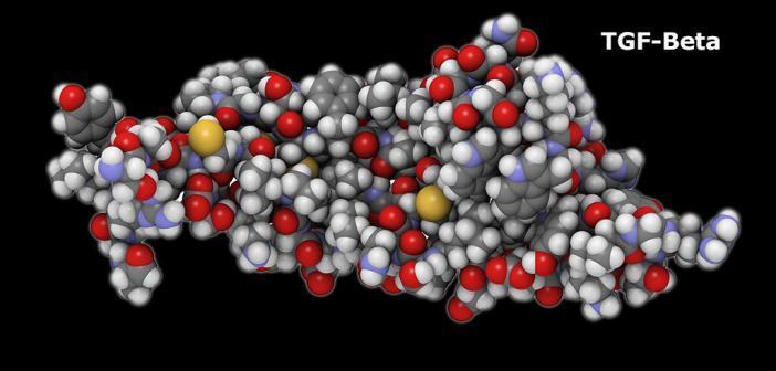 TGF-beta © molekuul_be / shutterstock.com