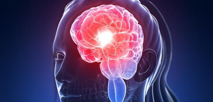 Mit dem Monatszyklus ändert sich die Struktur des Gehirns bei Frauen. © sebastian kaulitzki / shutterstock.com