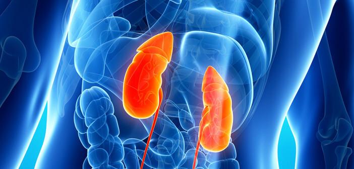 Nierenschwäche ist oft ein unbemerktes Leiden. © sebastian kaulitzki / shutterstock.com