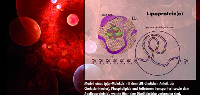 Lipoprotein(a) ist ein sehr gut erforschtes fettbeladenes komplexes Transportprotein.