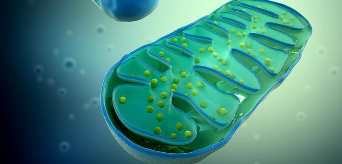 Man unterscheidet zwischen angeborener Mitochondriopathie und mitochondrialen Dysfunktionen (sekundäre Mitochondriopathie) © mopic / shutterstock.com