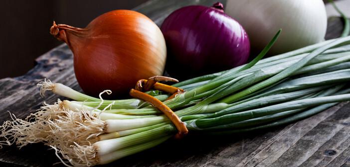 Zwiebeln – roh oder gekocht – versorgen den Körper mit viel Inulin. © ORLIO / shutterstock.com