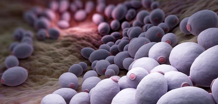 Candida albicans wird in etwa 90Prozent der Fälle als Erreger bei der Frau nachgewiesen. © tatiana shepeleva / shutterstock.com