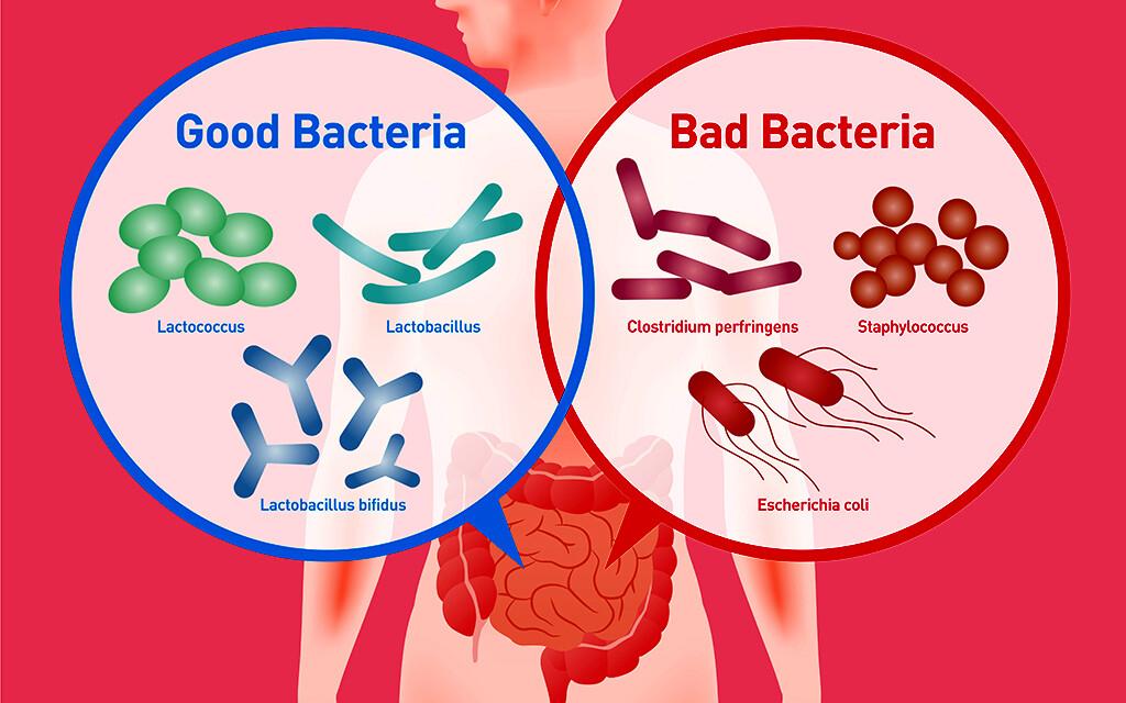 darmflora, Mikrobiom © chombosan / shutterstock.com