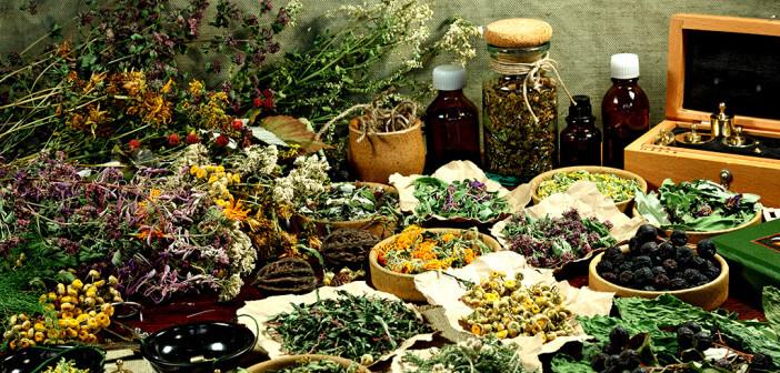 Seit jeher werden Erkältungssymptome bei Erwachsenen und Kindern mit Heilpflanzen gelindert. © svrid79 / shutterstock.com