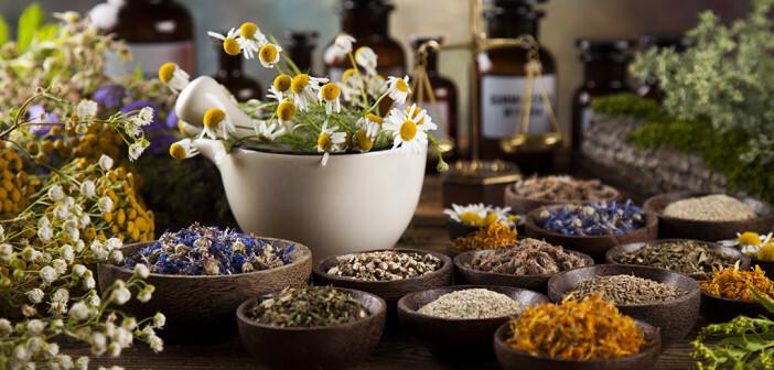 Phytotherapie, Einsatz von Arzneipflanzen. © Sebastian Duda / shutterstock.com