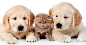 Die Frage, ob Haustiere guttun, glücklicher und zufriedener machen, ist nicht so einfach zu beantworten. © Ermolaev Alexander / shutterstock.com