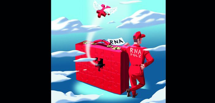 Ein Vorrat an RNA-Molekülen in einer Art Zwischenablage ermöglicht dem Gehirn schnell auf neuronale Reize zu reagieren. © Universität Basel / Biozentrum