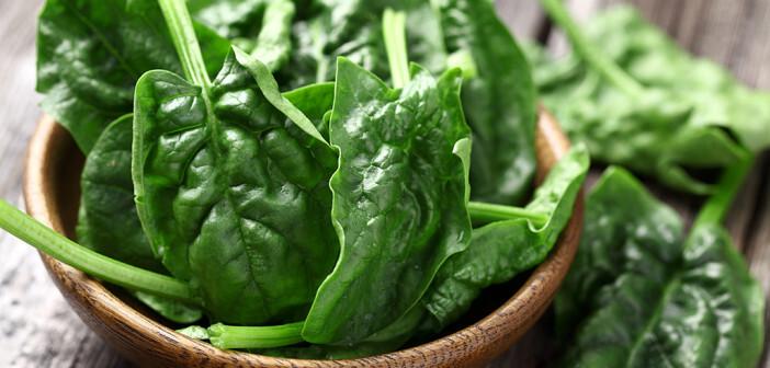 Nur etwa 15% der Spinaternte gelangen als Frischgemüse direkt in die Küche, wobei Spinat als Rohkost und Salat gegessen werden kann. Meist wird er gekocht als Gemüse zubereitet. © dionisvera / shutterstock