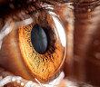 Diabetes kann die Sehschärfe beeinflussen. © air009 / shutterstock.com