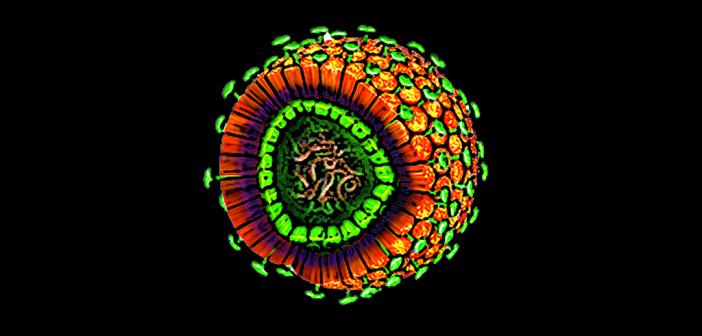 Abbildung eines Hepatitis-B-Virus © HZI / Britta Mießen