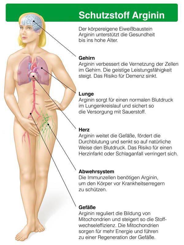 Der natürliche Eiweißbaustein Arginin hat zahlreiche positive Wirkungen im Körper und kann speziell das Herz-Kreislauf-System schützen. © djd / Telcor Arginin-Forschung