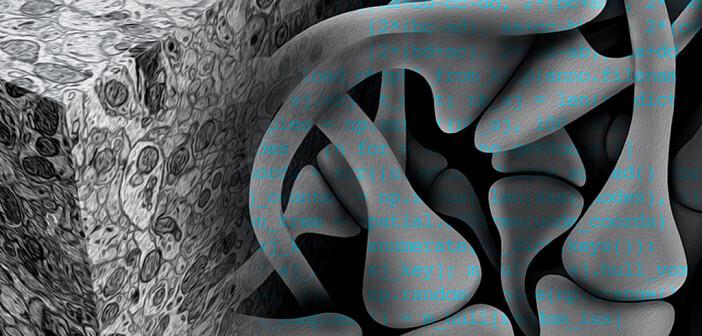 Mit Hilfe künstlicher neuronaler Netze wollen Neurobiologen den Schaltplan des Gehirns entschlüsseln. © Julia Kuhl