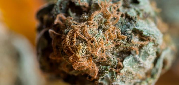 Das Abmessen von Cannabisblüten nach Gefühl ist für eine medizinische Anwendung nicht zu verantworten. © Wollertz / shutterstock.com