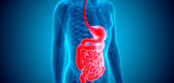 Gastroenterologisches System © Magic mine / shutterstock.com