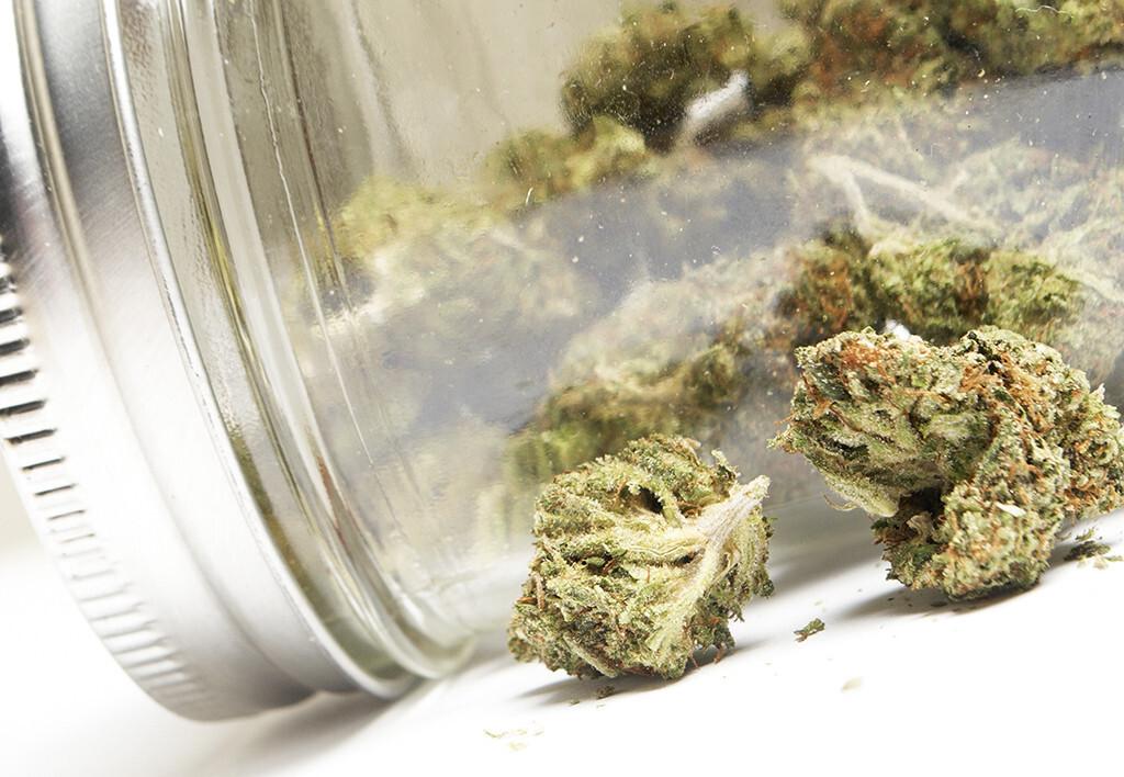 Medizinisches Cannabis, Cannabis sativa, Hanf, Medizinalhanf, Cannabisblüten. © Doug Shutter / shutterstock.com