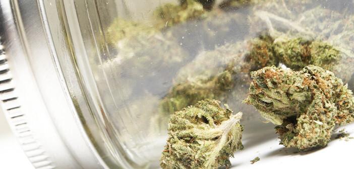 Medizinisches Cannabis, Medizinalhanf, Cannabisblüten. © Doug Shutter / shutterstock.com