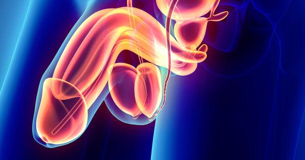 Peniskrebs-Therapie: organerhaltende Operation bei