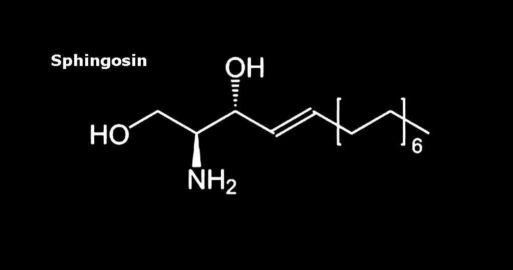 Bei Spaltung der Fett-Zuckerverbindungen außerhalb der Lysosomen durch das Enzym GBA2 entsteht unter anderem Sphingosin.