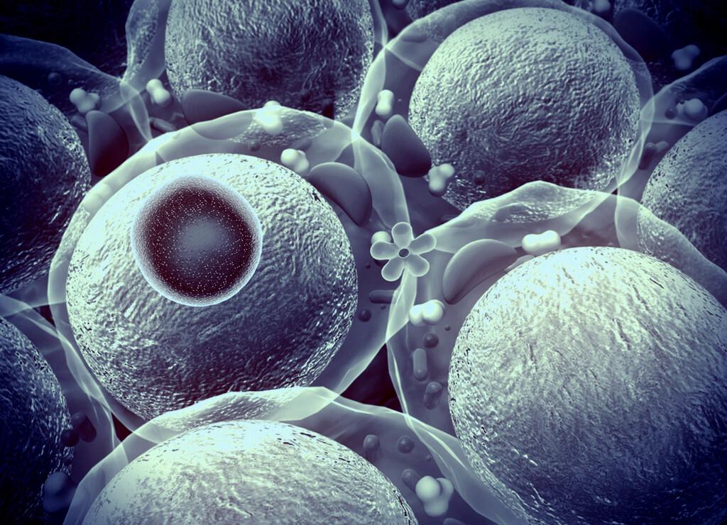 Modell zu B-Zellen, Insulin und Proteine (secretagogin) bei Diabetes. © UGREEN 3S-  shutterstock.com
