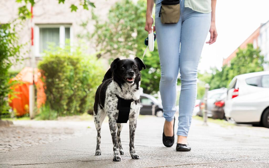 Da sich Hunde nicht selbst Gassi führen können, müssen die Halter aktiv sein. © Andrey Popov / fotolia.com